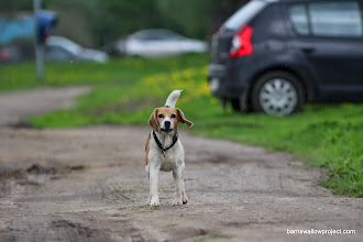 Photo: This dog followed us around for several hours and gave us a bad rep by association (Not a popular dog)