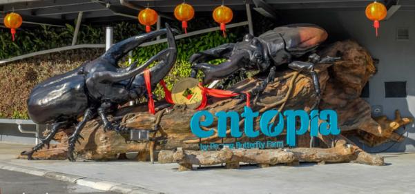 Entopia