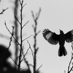 by Mario J - Black & White Animals ( bird, black and white )