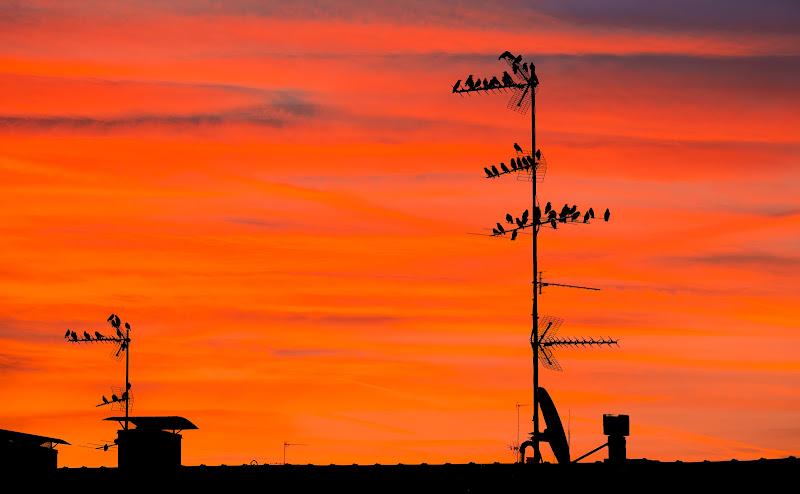 Migranti al tramonto di felixpedro