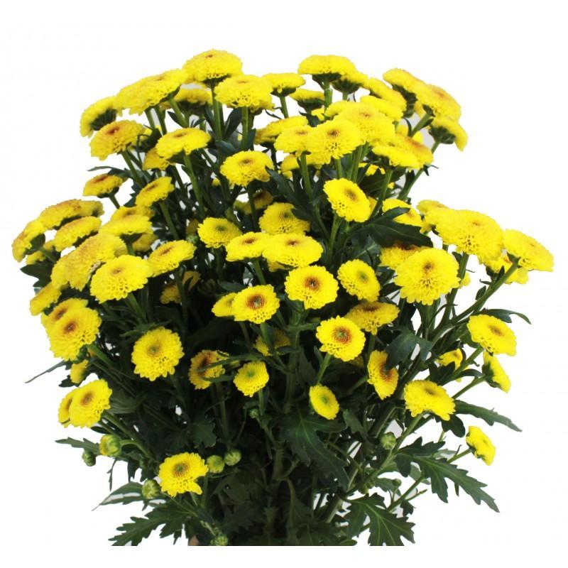 Ảnh có chứa vàng, hoa, cây, bầu trời  Mô tả được tạo tự động