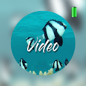 Animal video wallpapers icon