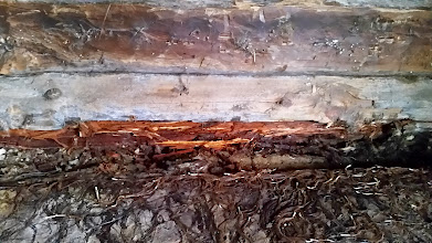 Kuva: kovin on pehmyttä puuta