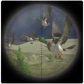 Jungle Birds Sniper Hunting