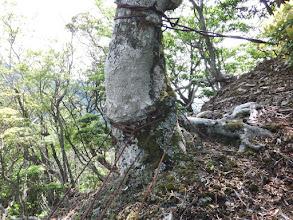 岩峰下にワイヤー跡