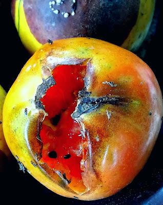 Ultimo ciclo della frutta di Robyvf