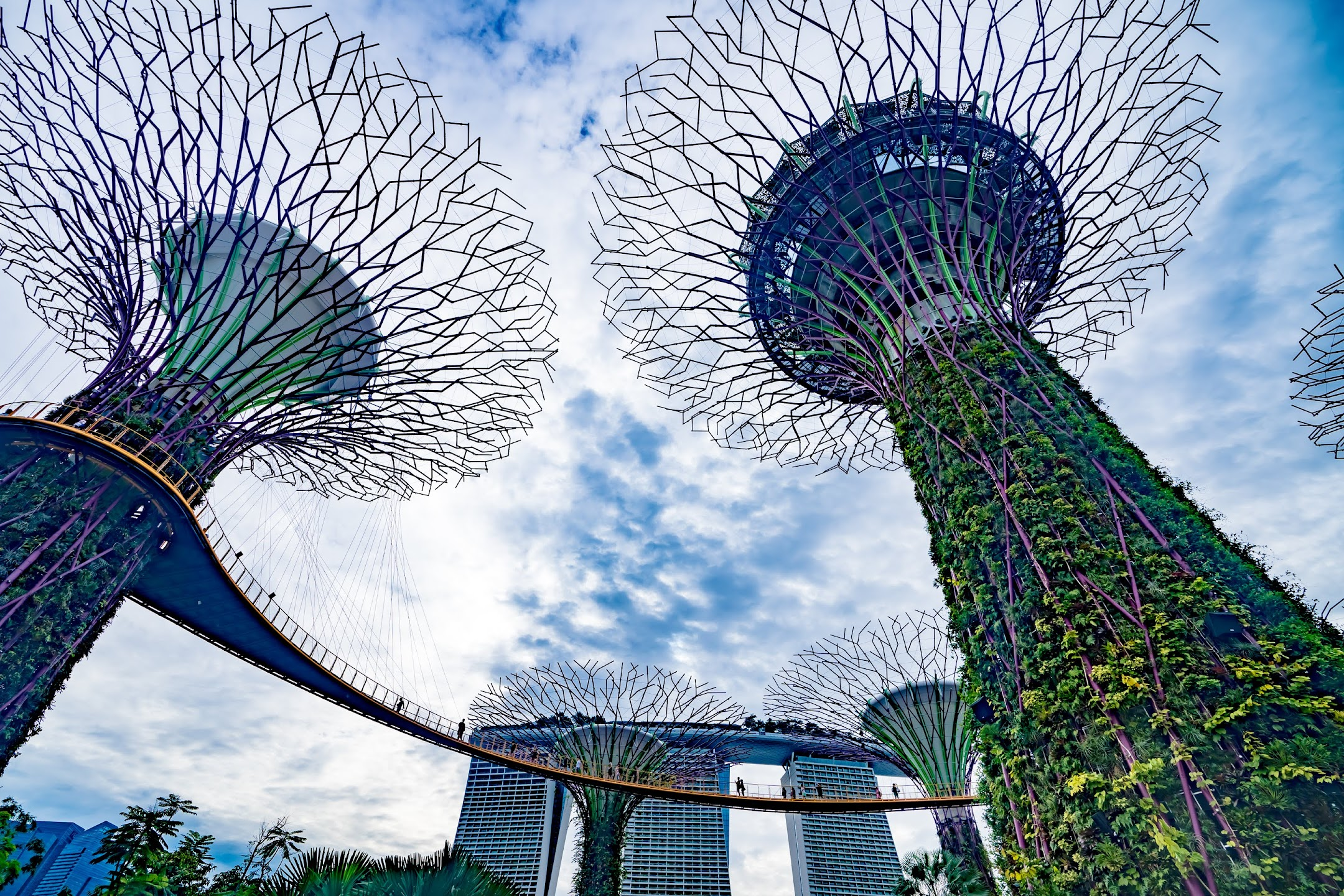 Singapore Gardens by the Bay Supertree Grove2