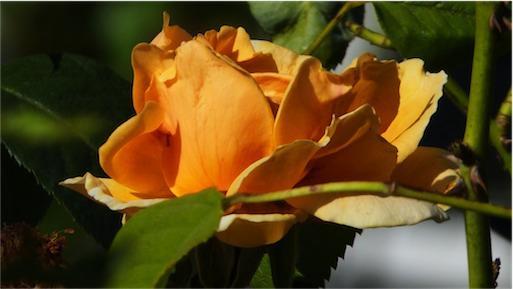 August Orange.jpg