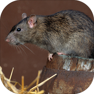download Mouse and Rat sounds apk