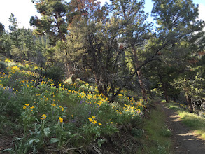 Photo: Eagle Ridge Loop-Arrowleaf Balsamroot and Lupine