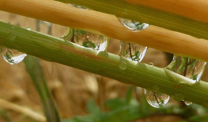 Pioggia d'estate..tra le spighe del grano.. di lucianalu