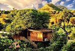Best Resort in Jaipur for Destination Wedding - Tree House Resort Jaipur