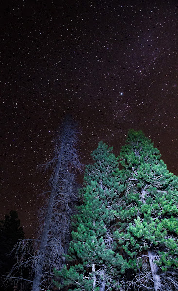 Photo: Another night sky with the trees illuminated by my flashlight