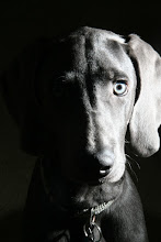 Photo: Aster, 5 months old