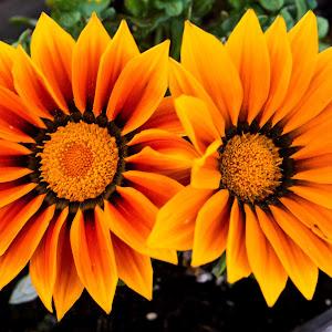 cbirthday flowers_0006_edited-1.jpg