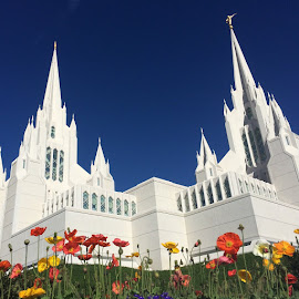 San Diego LDS Temple by LaDawn Park - Buildings & Architecture Places of Worship (  )