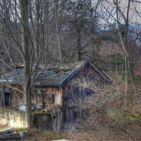 The House by Japie Scholtz - Landscapes Forests ( wod, tree, jungle, bush, forest, house,  )