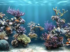 Visiter New York Aquarium