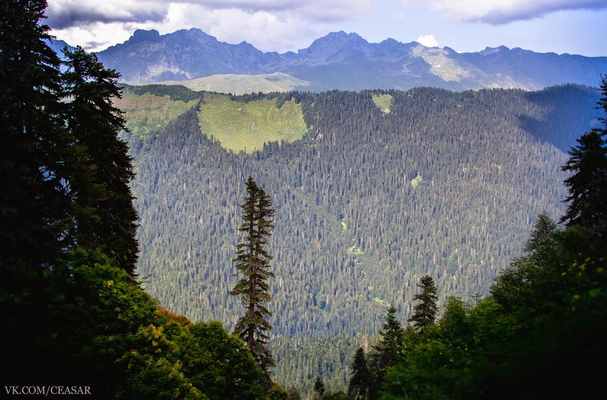 Альпийские луга, Рица, Абхазия