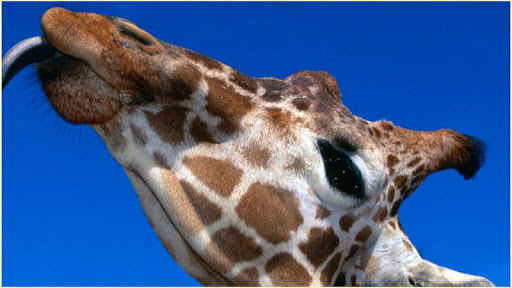 HD野生動物の写真