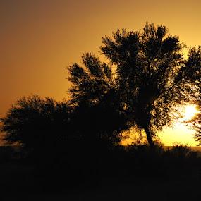 Serenity by Dj Hostalero - Landscapes Deserts ( desert, acacia valley, sunset, djmaculet, saudi arabia )