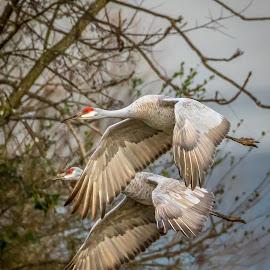 by Pam Wendel - Animals Birds