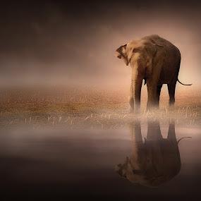 Elephant in the Mist by Jennifer Woodward - Digital Art Places ( animals, elephant, wildlife, composite, photoshop )