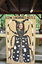 Photo: Asian Longhorned Beetle at Jamaica State Park by Linda Carlsen-Sperry