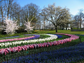 Photo: Parc floral du Keukenhof (3)