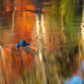 Fall and Spring by Jean Photo-Vigneault - Nature Up Close Leaves & Grasses
