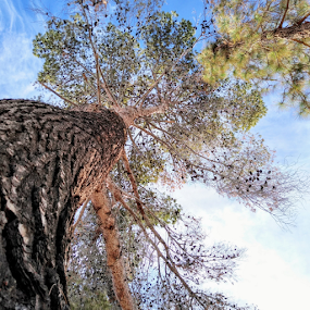 Big Daddy by Carlo McCoy - Instagram & Mobile Android ( sky, big, green, nature, arizona, outdoor photography, pine cones, branches, brown, trees, curves, mother nature, huge, tall, sunny )