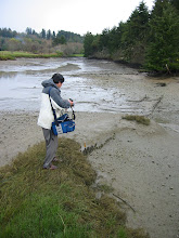 Photo: Akira Matsui. a Japanese archaeologist, looking at stake elements from a wet site in Washington (low tide exposes the weir remains). More on the northwest coast - follow this link http://wsm.wsu.edu/s/we.php?id=192