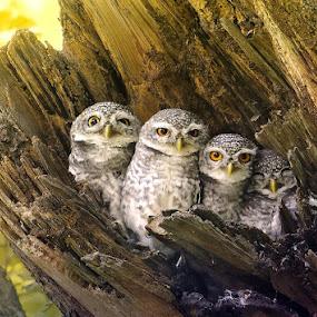 4 by Sasi- Smit - Animals Birds