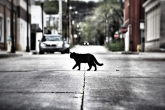 Photo: Mouse Patrol