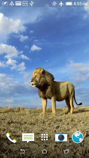 ライオンズのビデオライブ壁紙