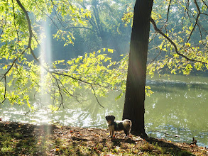 Photo: Little shih tzu puppy by a pond in the morning at Eastwood Park in Dayton, Ohio.