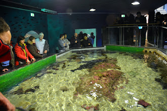 Photo: The local sea life exhibit