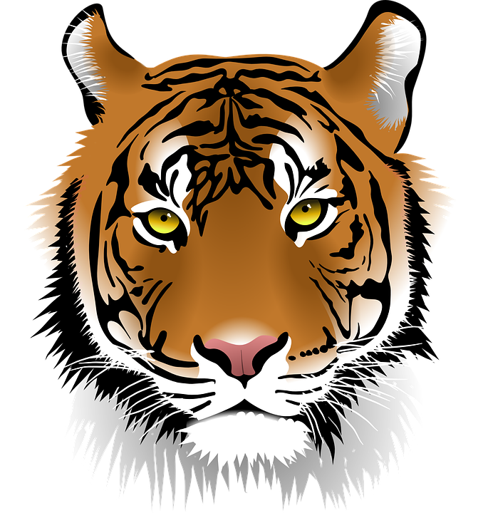 Free photo: Tiger, Snarling, Close-Up, Head - Free Image on ...