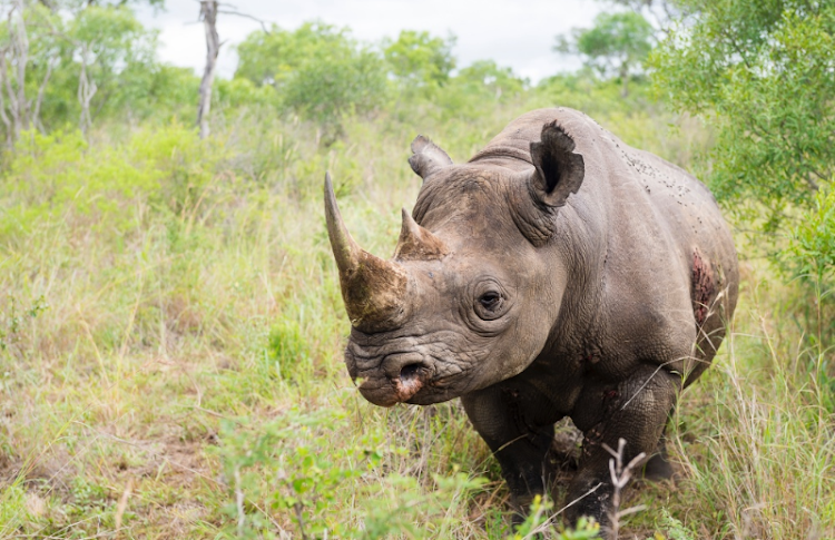 Rhino Revolution is located in Hoedspruit, a small farming and wildlife community at the heart of SA's greatest rhino population