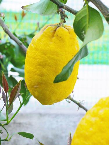 Lemon smell di elisa93