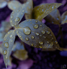 "Photo: ""Purple Grass"" Siguma 20mm"