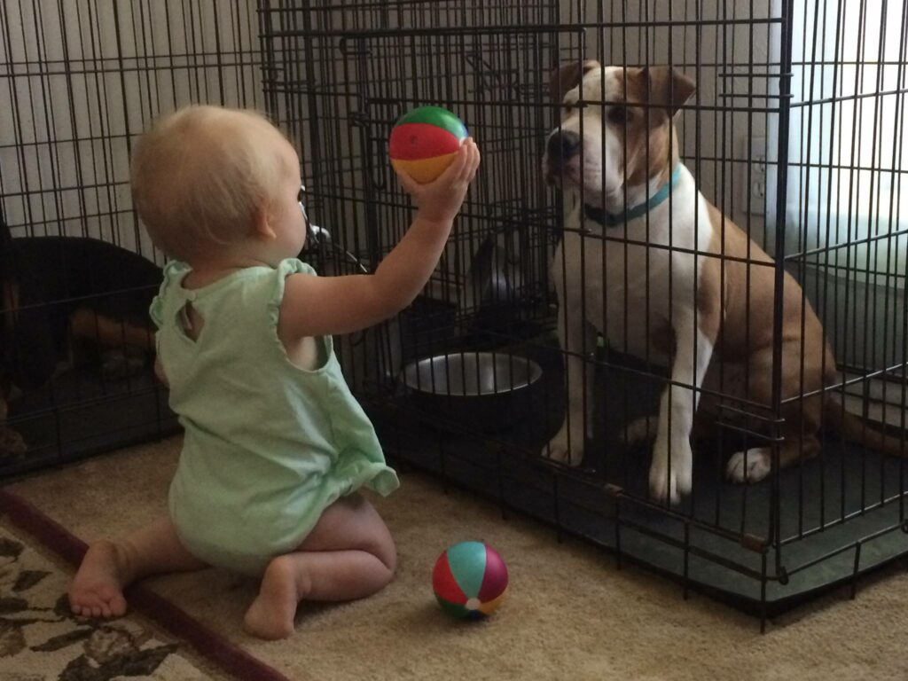 Crate training your dog before your new baby comes home has many great benefits!
