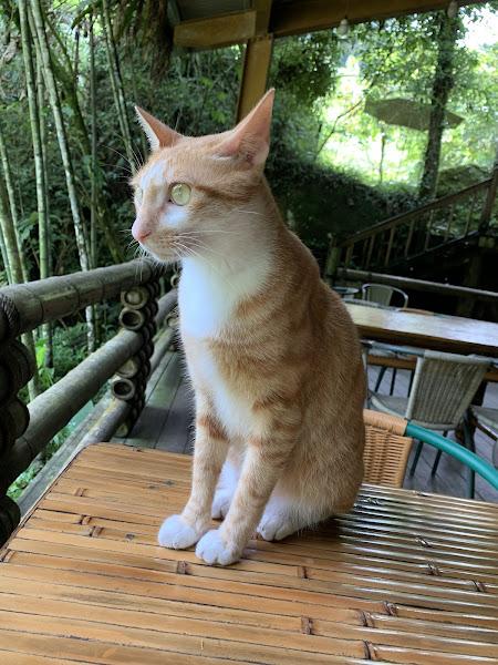 介紹一下~店貓 乖乖❤️(不一定都會在店裡會趴趴走~想遇到要靠緣分喔~  為了貓貓我給五星🌟🌟🌟🌟🌟 套餐火鍋也很好吃喔😋~ 放鬆休閒涼爽的好地方👍
