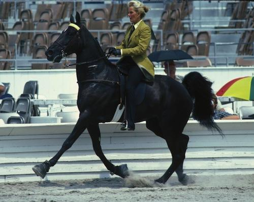 http://2.bp.blogspot.com/-QaS6SszRp_Y/UCFvfEBS6-I/AAAAAAAAFEU/xXx1u1KUw5s/s1600/USDA+walking+horse+under+saddle.jpeg