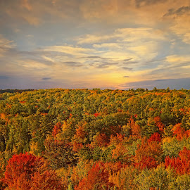 Autumn Colors by Bill Diller - Digital Art Things ( digital, calm, forest, sunrise, michigan, nature, calmness, tranquility, tranquil, woords, trees, peaceful )