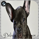 French Bulldog Wallpapers (app)