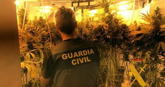 Cae una clan de Vícar con 1.600 plantas de marihuana que amenazó a una vecina