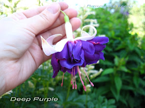 Photo: Deep Purple