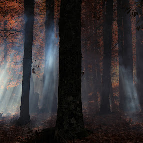 encantado by Miguel Lopez De Haro - Landscapes Forests ( black and white, b and w, landscape, b&w, monotone, mono-tone )