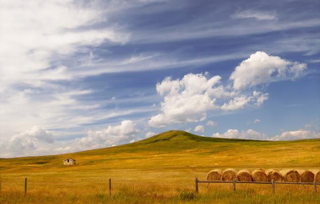 Summer in  Montana di Dariagufo